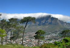 Tall pine trees and white cloud cover Table Mountain and town in Cape Town Royalty Free Stock Photo