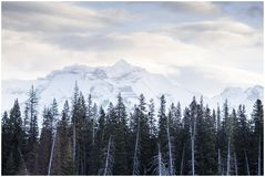 Tall pines in foreground of snow covered mountain in early morning. Winter, travel and inspiration concepts Stock Photos
