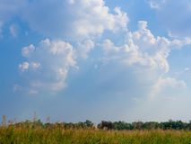 Tall Reed. Landscape, Row Tall Reed Dancing in The Wind and Cloud with Blue Sky Stock Images