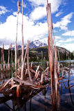 Tall reeds in the mountains Royalty Free Stock Image