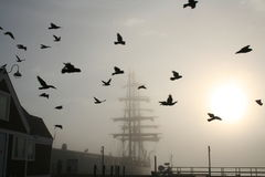 Tall Ship with Birds Stock Images