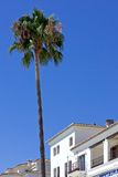 Tall single palm tree next to buildings in Duquesa port in Spain Stock Images