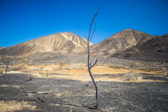 Tall Skinny Burned Tree Royalty Free Stock Photography