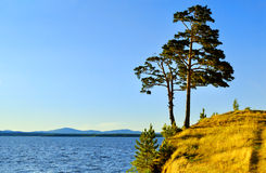 Tall spreading pine tree standing on the steep cliff at Irtyash Lake in Southern Urals, Russia Stock Photography