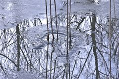 Tall Stems of Reeds Cast Dark Reflections On Icy Waters. The stark coldness of Winter brings its own strange beauty in abstract patterns of Natures diversity royalty free stock photos