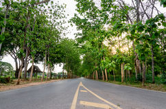 Tall Teak Road. Tall Teak beside both side of lonely road Royalty Free Stock Image