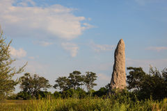 Tall termite mound dominates the landscape in grassland Royalty Free Stock Photos
