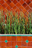 Tall thin plants against a red tile wall Stock Image