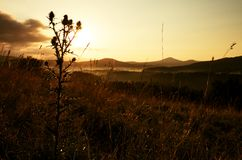 Tall thistle, dry grass silhouette , long stalks sunrise meadow Royalty Free Stock Photo