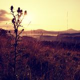 Tall thistle, dry grass silhouette , long stalks sunrise meadow Stock Photo