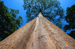 Tall Tree Stock Photo