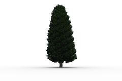 Tall tree with green foilage Stock Photos