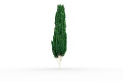 Tall tree with green foilage Royalty Free Stock Images