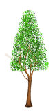 Tall tree vector illustration