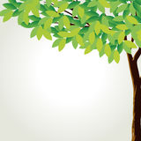 A tall tree Stock Photos