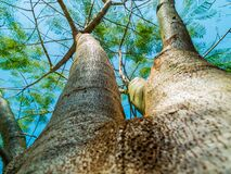 Tall Tree in Low Angle Photo Under Blue Skies Stock Image