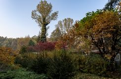 Tall tree in the middle of a colorful garden. In autumn stock image