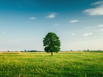 Tall Tree on the Middle of Green Grass Field during Daytime royalty free stock photo