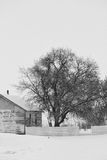 A tall tree beside a shed surrounded by snow. In black and white Stock Photography