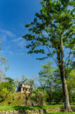 Tall Tree and Temple Stock Image