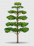 Tall tree on transparent background Stock Photo