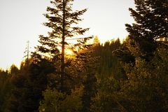 Tall Tree Between Yellow Leaf Trees during Golden Hour Stock Photography