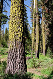 Tall trees Stock Photo