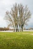 Tall trees against a dark sky Royalty Free Stock Photo