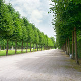 Tall trees along the footpath Royalty Free Stock Photos
