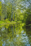 Tall trees on the banks, reflected in a lake Royalty Free Stock Photography