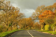 Tall Trees Between Long Road On Country Side Drive Royalty Free Stock Photos