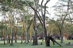 Tall trees close to Lake Naivasha Stock Image