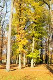 Trees with colorful leaves in autumn Royalty Free Stock Photography