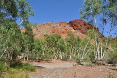 Tall trees in dry riverbed with rock outcrop australian outback Stock Photo