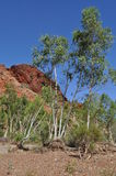 Tall trees in dry riverbed with rock outcrop australian outback Royalty Free Stock Image