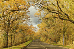 Tall trees of fall colors between long road Stock Photography