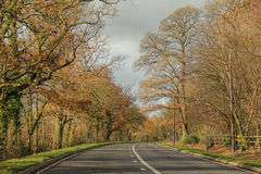 Tall trees of fall colors between long road on country side drive Royalty Free Stock Photography