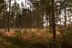 Tall trees in the grass in the forest. In autumn Royalty Free Stock Photo