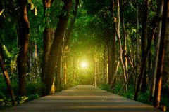 Tall trees with green leaves along forest path with wood corrido. R Royalty Free Stock Photography