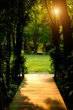 Tall trees with green leaves along forest path with wood corrido. R Stock Image