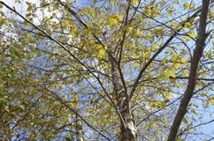 Tall trees Stock Photography