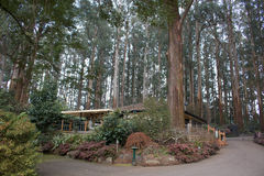Tall trees. House among tall trees in the Dandenong ranges Stock Images