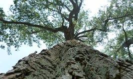 Tall trees. Huge trees on the banks of Lake Seneca, USA Stock Image