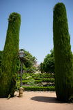 Tall trees in The jardines, royal garden of the Alcazar de los R. The jardines of the Alcazar de los Reyes Cristianos Royalty Free Stock Image