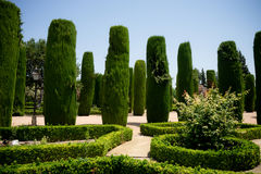 Tall trees in The jardines, royal garden of the Alcazar de los R. The jardines of the Alcazar de los Reyes Cristianos Stock Image