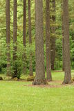 Tall trees jungle view Stock Photos