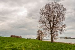 Tall trees just budding on the flood plain of a Dutch river. Tall trees just budding on the flood plain of the Dutch river Bergsche Maas near the village of royalty free stock photos