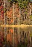 Tall Trees at the Lake Royalty Free Stock Photography