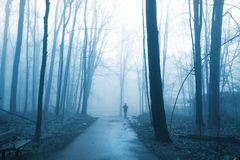 Tall trees in morning fog. Royalty Free Stock Photo