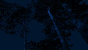 Tall Trees Move Around In Strong Wind At Night. Group of tall trees sway in the wind late at night stock video footage